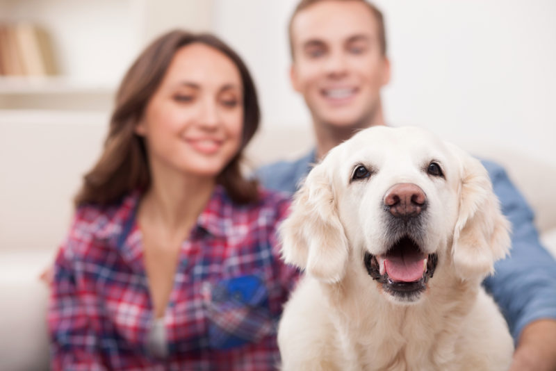 Pets and Your Home's HVAC System